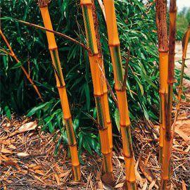 phy-bamb-casti