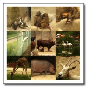 zoo-vincennes.jpg