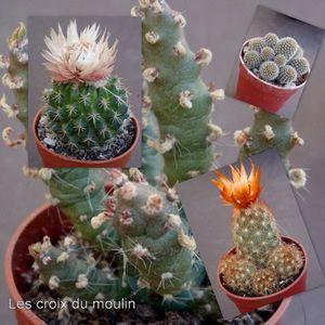 Cactus de Pascale