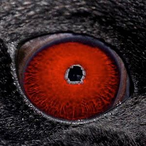 animal-eye-quiz-by-telegraph