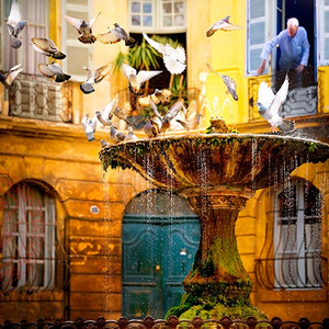 Jurek-Nems_pigeons-a-aix-2011.png