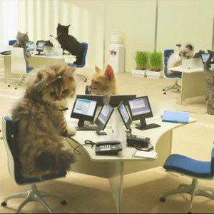 publicite-bouygues-telecom-chatons-chats-video-animaux.jpg