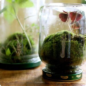 glass-jar-diy-terranium