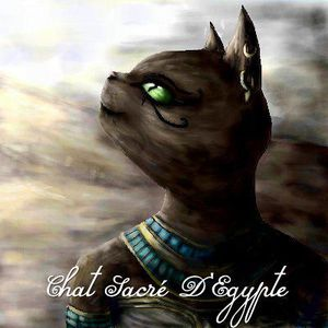 chats-egyptiens.jpg