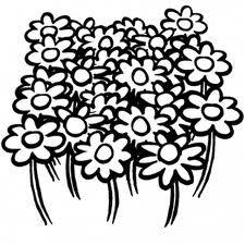 fleurcolo.jpg