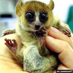 1-lemurien-1.jpg
