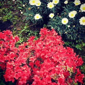2012-05-11_1336740349.jpg