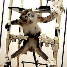 SINGE-vivisection--copie-1.png