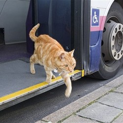 chat-Dodger-prend-le-bus-PBridport-GB.png
