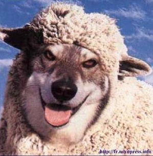 loup-mouton.jpg