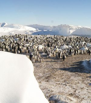 deux-colonies-de-manchots-decouvertes-en-antarctique-coloni.jpg