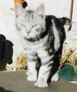 premiere-photo-de-Tigri