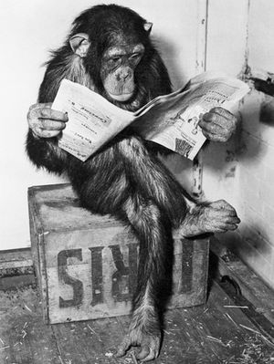 bettmann-chimpanzee-reading-newspaper.jpg