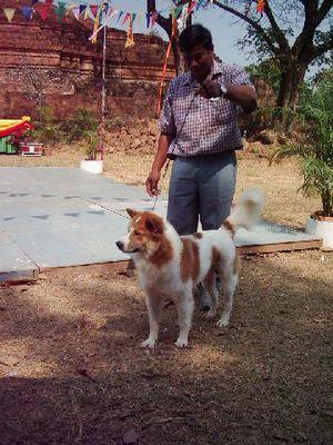 thai-bangkaew-chien