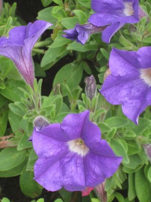 Fleurs (19)