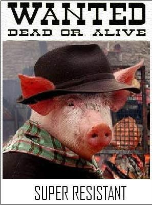 Wanted-cochon-resistant.jpg