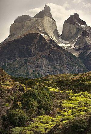 patagonie_arbre_montagne.jpg