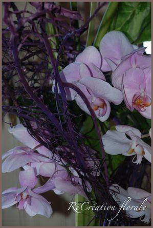 Expo AF orchidées 106