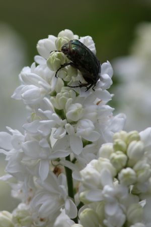 insectes4077