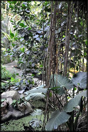 Serres-Tropicales-30a.jpg