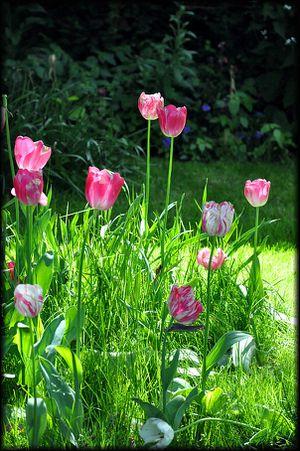 Giverny - Le Jardin de Claude Monet 1a