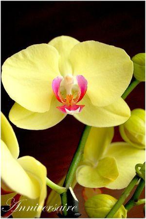 Menu 26 08 2012 L'Orchidée Jaune 2
