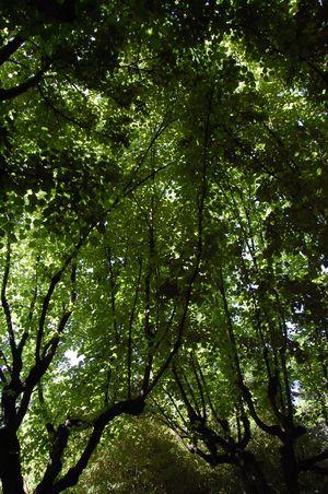 Barcelone parc de Pedralbes (2)