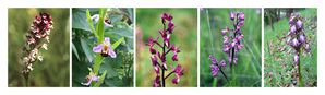 orchidees-BB-sign-red.jpg
