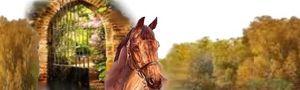 barre-sepa-chevaux-copie-1.jpg