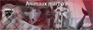 ANIMAUX-MARTYRS-labos.jpg