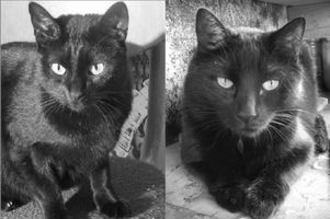 deux_chats.jpg
