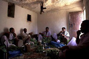 Seance de Qat chez Fares le cultivateur