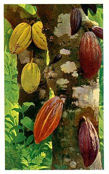 220px-Cacao_pods_-_Project_Gutenberg_eText_16035.jpg
