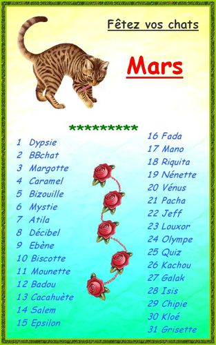 calendrier-pour-chats.jpg