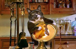 chat argenterie diligent housewife