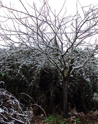 neige-copie-1.jpg