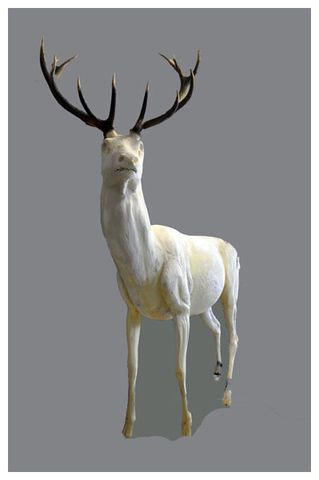 2011-taxidermiste-011