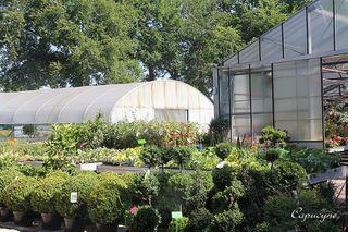 La-halle-aux-plantes 4485