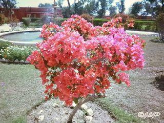 Rajasthan044marq