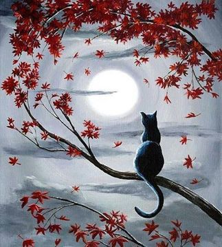 chat-lune-fb-fev-14.jpg