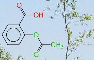 12 06 13 Aspirine et Saule Blanc Salix alba 2
