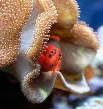 animal poisson divers4