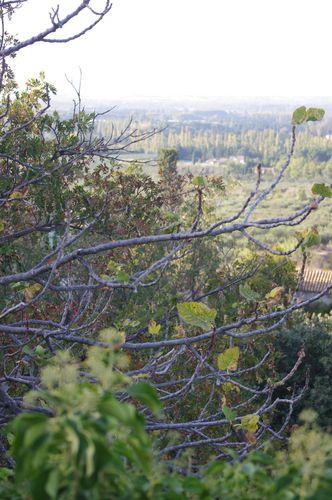 Dimanche d'automne à Eygalières