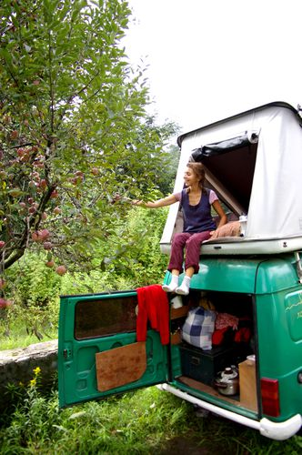 Inde Himachal-Pradesh Manali pommes (3)