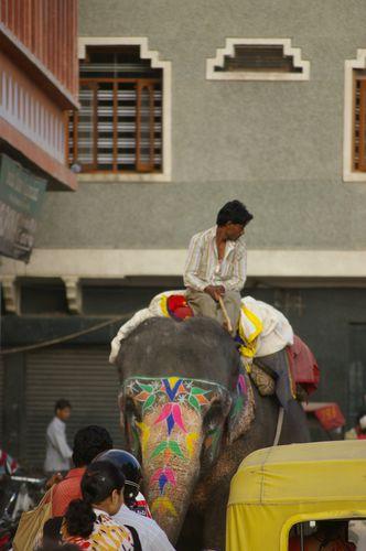 Inde Rajasthan Jaipur elephant