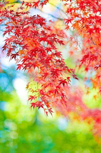 inspi-automne2bis.jpg