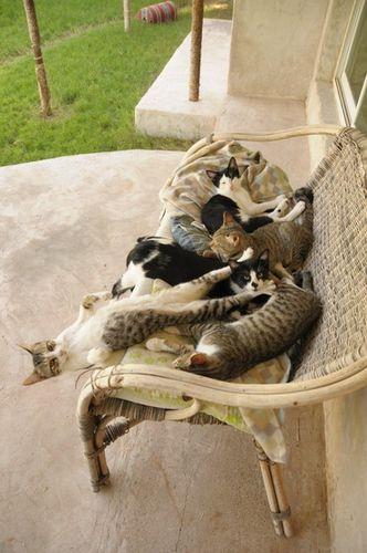 banc-de-chats.jpg