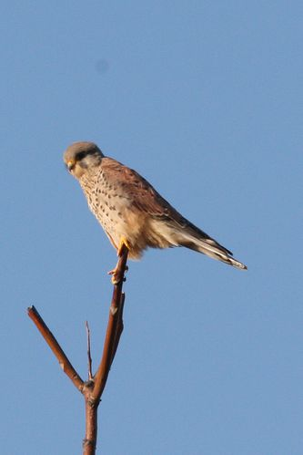 oiseaux0660