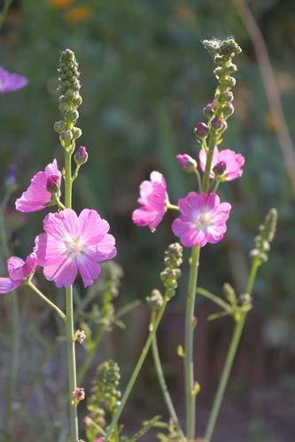 Fleurs 4798