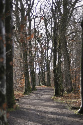 Allee forestiere LB21910